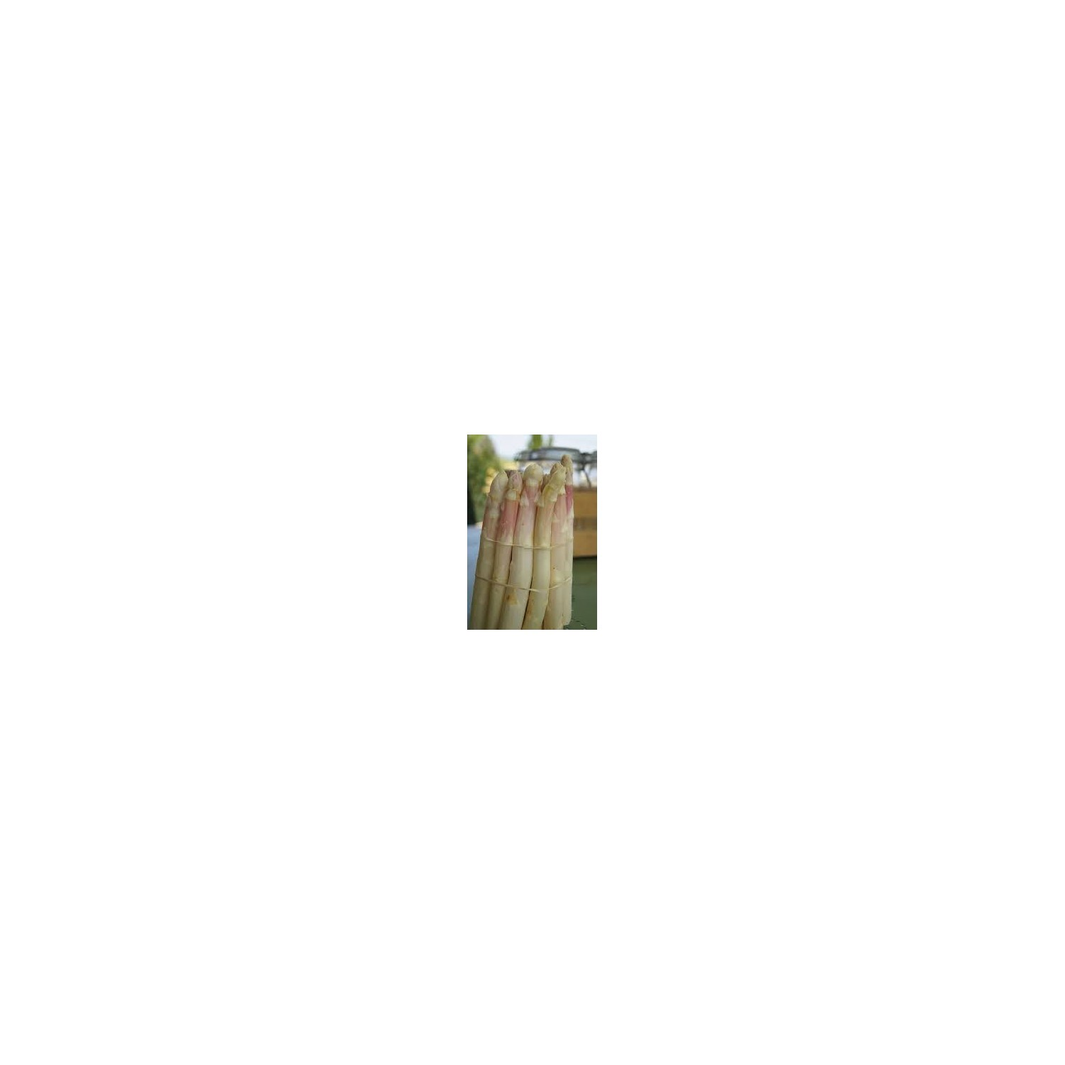 asperges blanches du pays 500g (grosse)