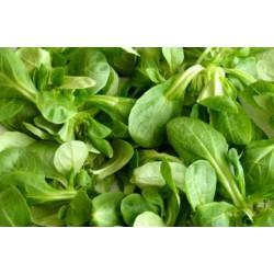 Salade de blé / Mâche (ravier 100g)